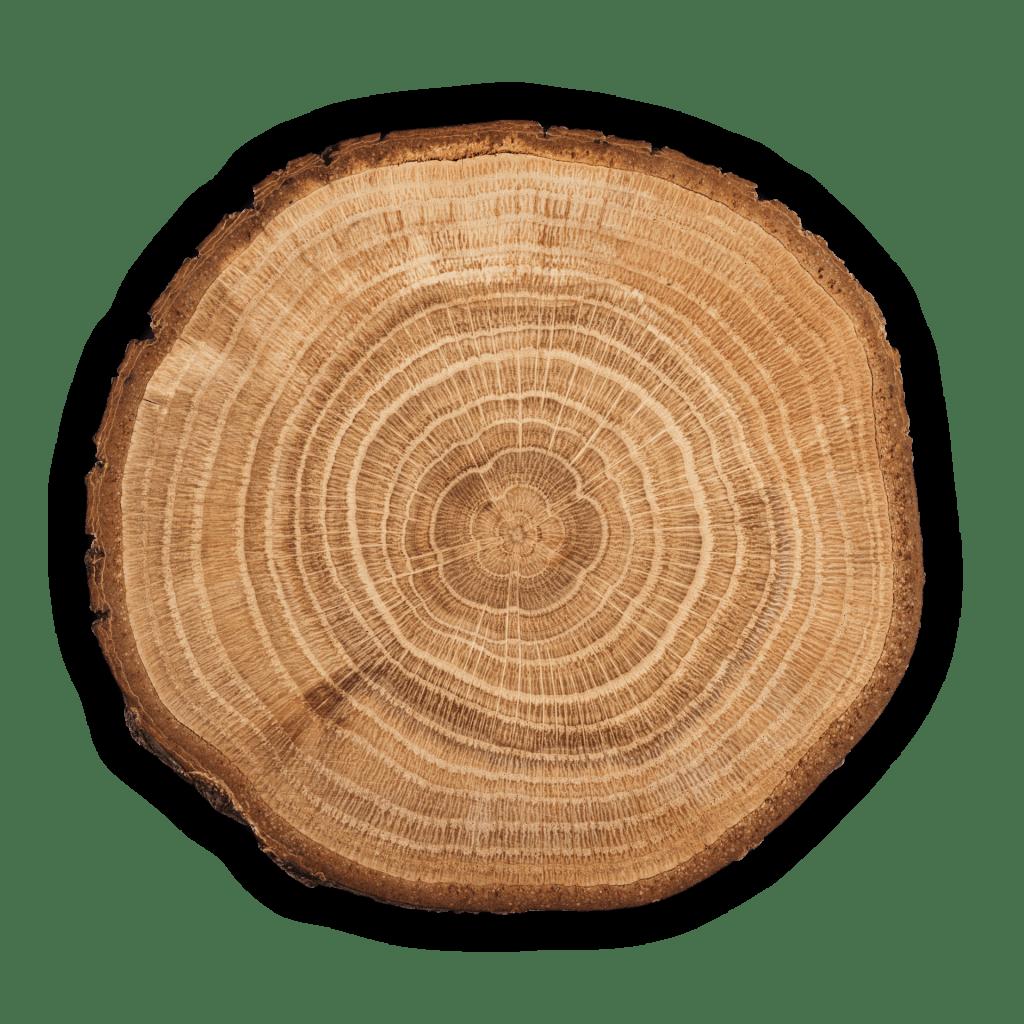 Českomoravská lesní a.s., Svitavy